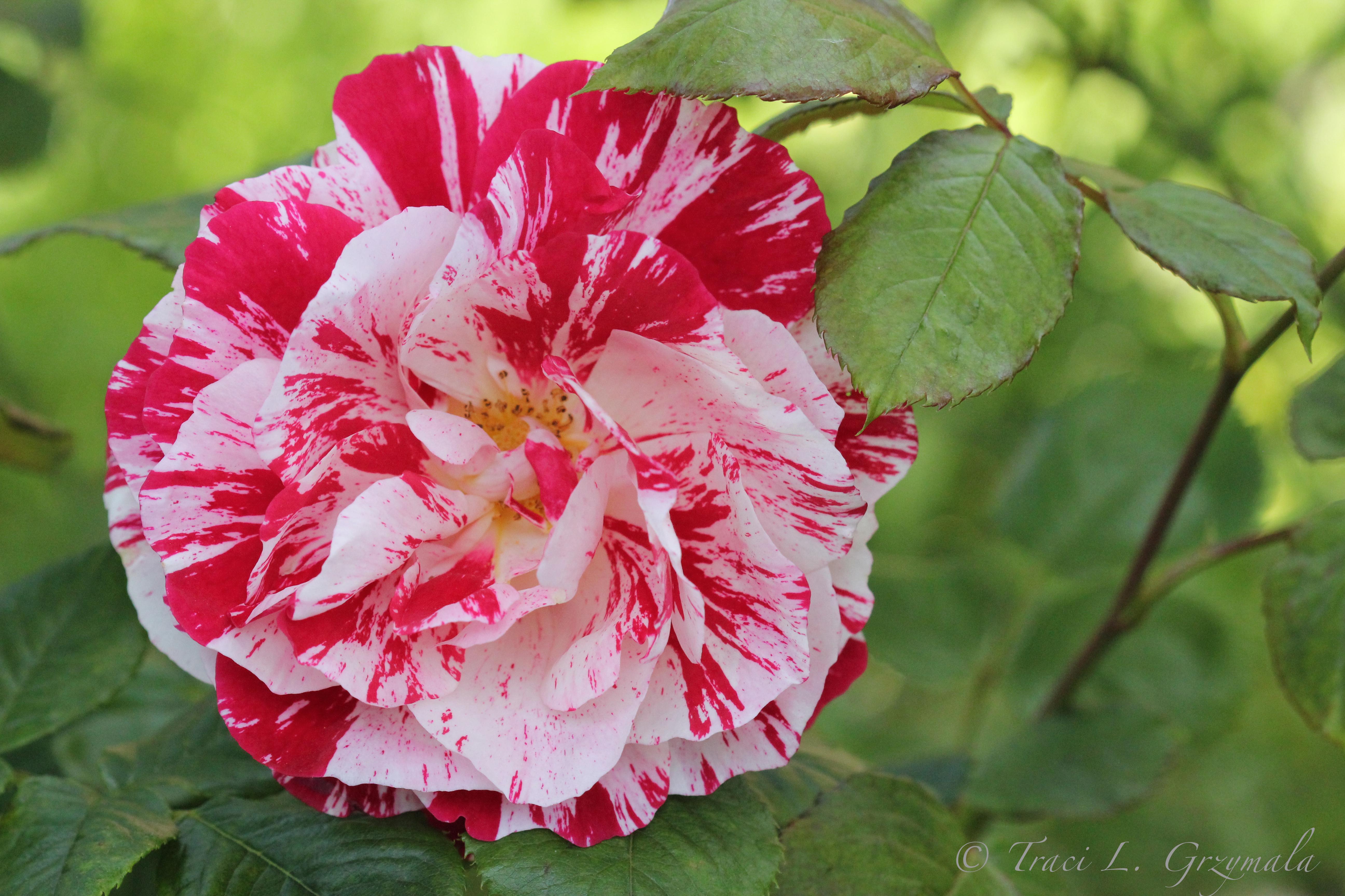 Flowers Traci L Grzymala