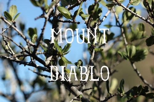mount_diablo