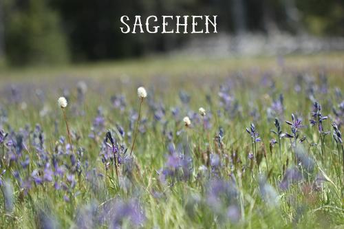 Sagehen1